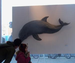 Onca Gallery Whalefest - Bottlenose Dolphin by Kendra Haste